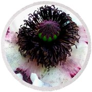 White Poppy Macro Round Beach Towel