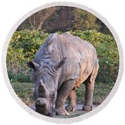 White Rhinoceros  Round Beach Towel