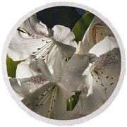 White Rhododendron B Round Beach Towel