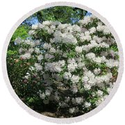 White Rhododendron Blooming In The Garden Round Beach Towel