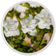 White Rhododendron Flowers In Bloom. Round Beach Towel