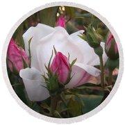 White Rose Pink Buds Round Beach Towel