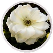 White Rose With Buds Round Beach Towel