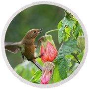White-sided Flowerpiercer Round Beach Towel