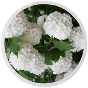 White Snowball Bush Round Beach Towel