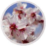White Spring Almond Flowers Round Beach Towel
