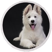 White Swiss Shepherd Dog Round Beach Towel