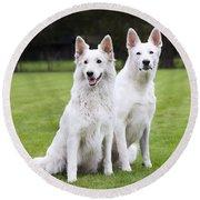 White Swiss Shepherd Dogs Round Beach Towel