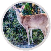 White Tail Deer Bambi In The Wild Round Beach Towel