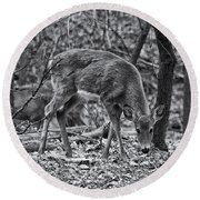 White-tail Deer Round Beach Towel