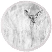 White-tail Doe High Key Round Beach Towel