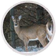 White-tailed Deer Round Beach Towel