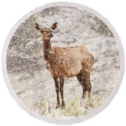 White Tailed Deer In Snow Round Beach Towel