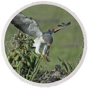 White-tailed Hawk At Nest Round Beach Towel