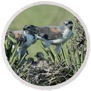 White-tailed Hawk Family Round Beach Towel