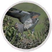 White-tailed Hawks At Nest Round Beach Towel