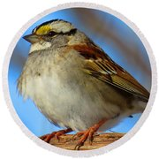 White Throated Sparrow And Blue Sky Round Beach Towel