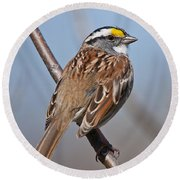 White-throated Sparrow Pictures 108 Round Beach Towel