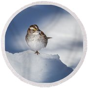 White Throated Sparrow Square Round Beach Towel