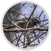 White-throated Sparrow With Berry Round Beach Towel