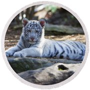 White Tiger Cub Round Beach Towel