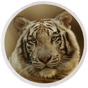 White Tiger II Round Beach Towel