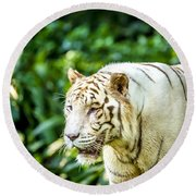 White Tiger Portriat Round Beach Towel