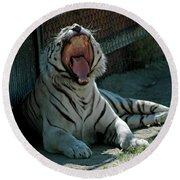 White Tiger Reno Nv 3 Round Beach Towel
