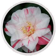 White With Pink Camellia Round Beach Towel