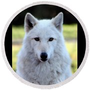 White Wolf Close Up Round Beach Towel