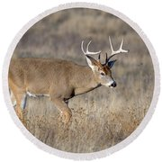 Whitetail Buck On The Move Round Beach Towel