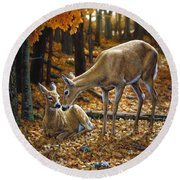 Whitetail Deer - Autumn Innocence 2 Round Beach Towel by Crista Forest