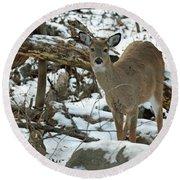 Whitetail Deer Doe In Snow Round Beach Towel