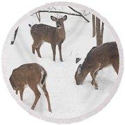 Whitetail Deer In Snowy Woods Round Beach Towel