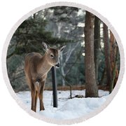 Whitetail In Woods Round Beach Towel