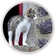 Who Goes There - Kitten Round Beach Towel