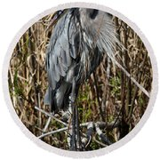 Who Is There - Great Blue Heron Round Beach Towel