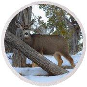 Who Me?  Oh Deer Round Beach Towel