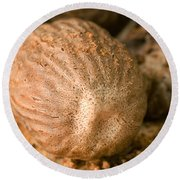 Whole Nutmeg Nuts Round Beach Towel
