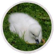 Whooper Swan Juvenile  Round Beach Towel