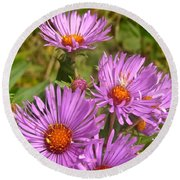 Wild Asters Round Beach Towel