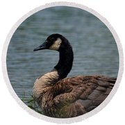 Wild Beauty - Canadian Goose Round Beach Towel