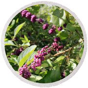 Wild Beautyberry Bush Round Beach Towel
