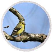 Wild Birds - American Goldfinch Round Beach Towel