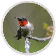 Wild Birds - Ruby-throated Hummingbird Round Beach Towel by Christina Rollo