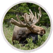 Wild Bull Moose Round Beach Towel