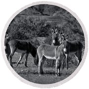 Wild Burros In Black And White  Round Beach Towel