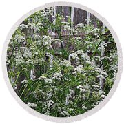 Wild Caraway And Old Fence Round Beach Towel