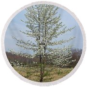 Wild Cherry Tree In Spring Bloom Round Beach Towel