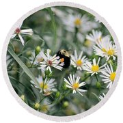 Wild Daisies And The Bumblebee Round Beach Towel